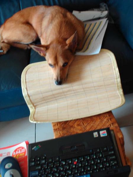 本犬專用目控式電腦