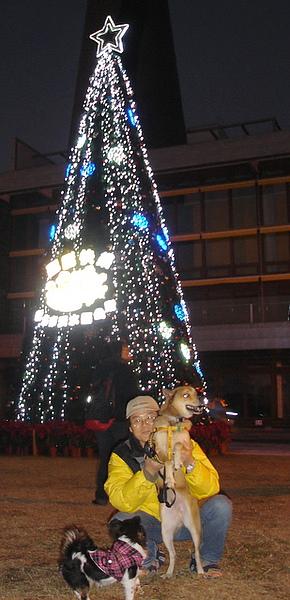 第一棵上面寫著新北市淡水區的聖誕樹