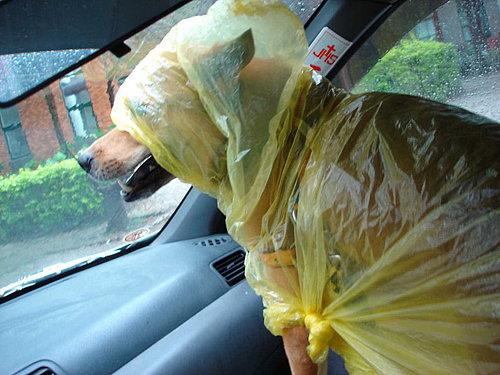 這雨衣讓我視線有些模糊