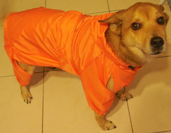 靚帥的雨衣