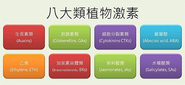八類植物激素.jpg
