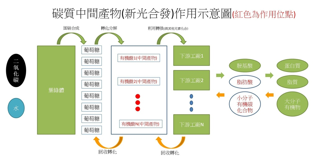 新光合發作用位置機制.jpg