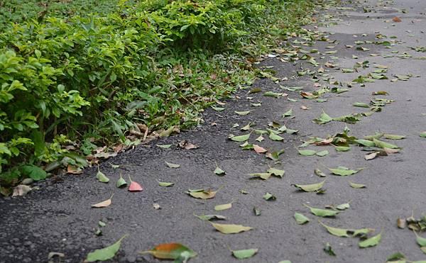 20111126-1在這個風起葉落的初冬,我們邀請了淺綠色樂團到橘之鄉。.jpg