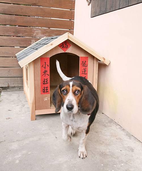 20120120-6橘之鄉鄉口小米的家也要來貼一下春聯.jpg
