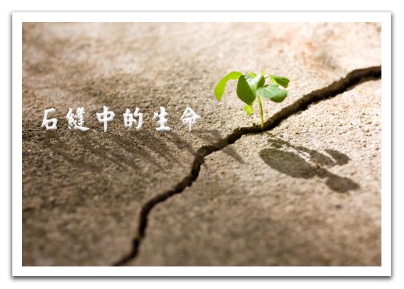 石縫中的生命.jpg