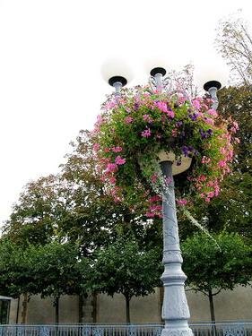 在這裡連路燈都精心種上花