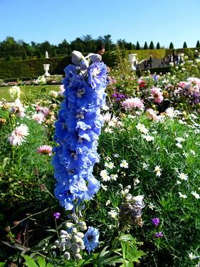 巴黎人種花看似隨性但每種花都美呆了