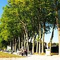 步道旁的樹不知道是啥品種可以綠成這樣
