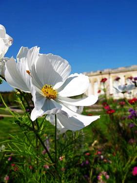 花園雖小但花一樣很美