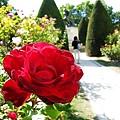 羅丹花園玫瑰也是大的跟拳頭一樣~看到後面的沉思者了嗎?