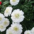 欣賞一下路邊可愛的野花