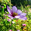 擁有自己一整座花園跟蓮花池的莫內真幸福