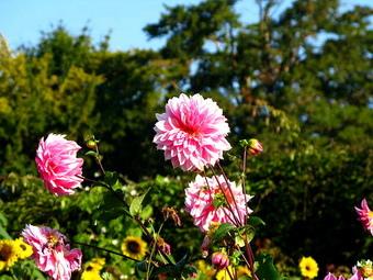 上百種花朵品種的花園