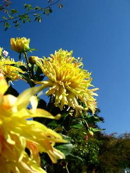 這樣的假花....蜜蜂都會被騙吧