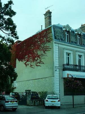 坐公車回去的路上看到爬這紅色藤蔓的房子