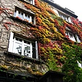 橘紅色的爬藤植物宣告秋天的來臨