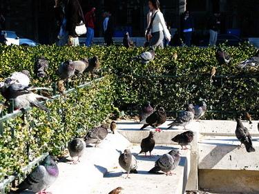 聖母院前的廣場是麻雀跟鴿子王國吧