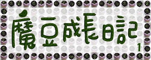 20070519 魔豆成長日記1