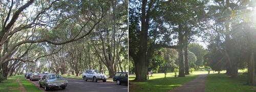 080102 再遊One Tree Hill (9)