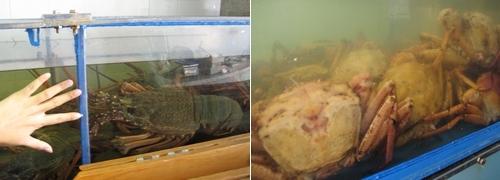 080313 奧克蘭魚市一遊 (3)