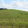 來紐之後第一次看到的風吹草低見牛羊