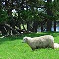 離開 Te Paki 時見到的小綿羊,有沒有很豐力富哈哈