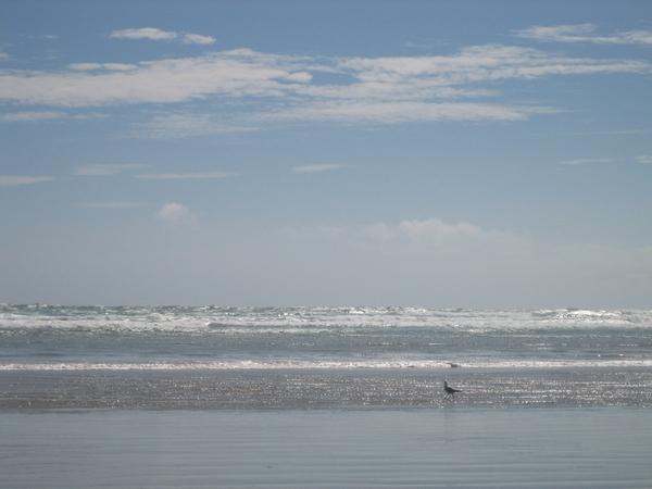 小鳥兒也在踏浪