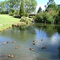 Whangarei Falls 外的小池塘