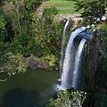 俯瞰 Whangarei Falls