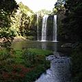 Whangarei Falls 全景