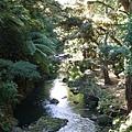 Whangarei Falls 下游的小溪流