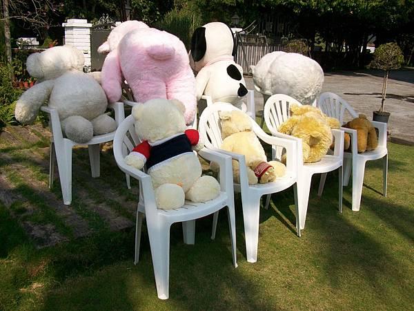 熊熊做日光浴-2