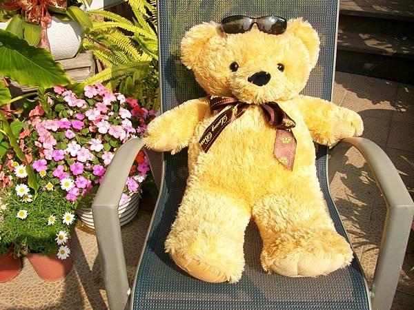 日光浴熊-2
