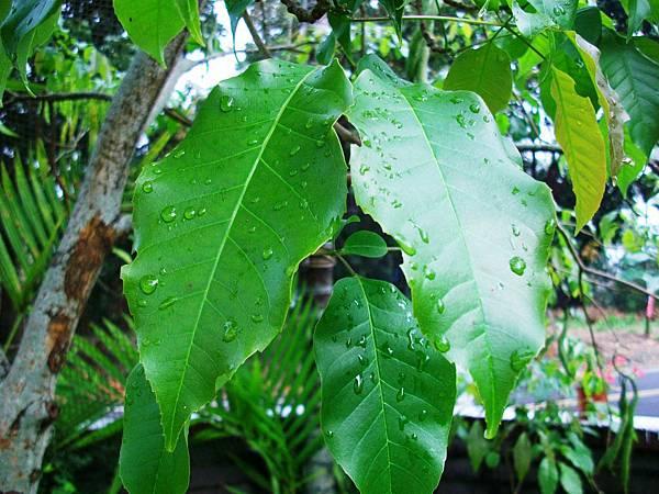 雨後的莊園-4