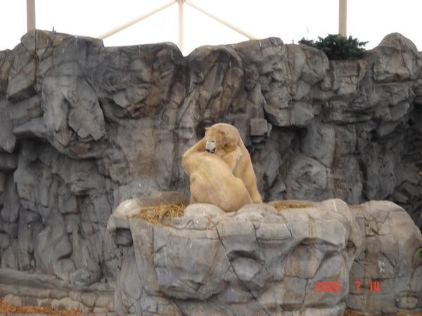 """我日以繼盼的\\\\\\\""""雪白\\\\\\\""""北極熊 ~"""