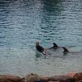 和海豚說話 !