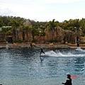 海豚載她在水上飛喔 !  好厲害 !