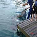 人們也可以和海豚有親蜜接觸唷~~