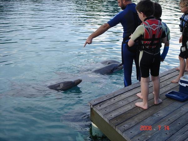 一堆小朋友要和海豚玩 !