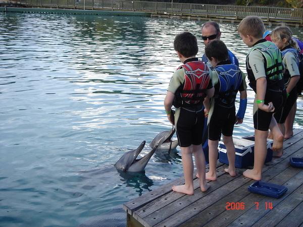 海豚在笑ㄋㄟ...
