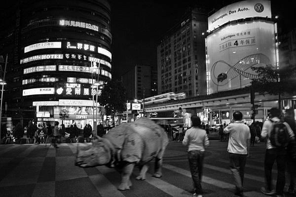 Rhino in Your Life