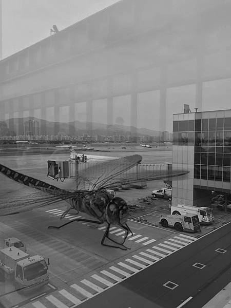 Dragonfly in Airport.jpg