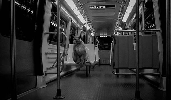 Monkey on train.jpg