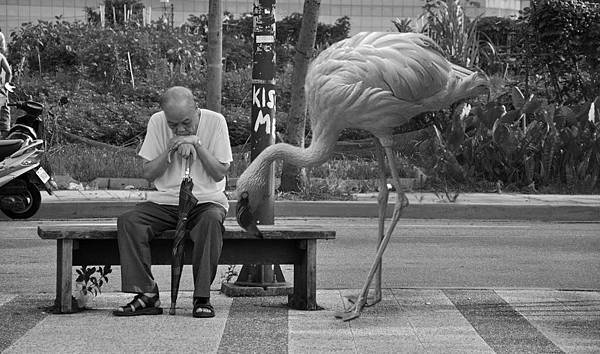 Old man and flamingo03.jpg