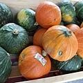 致理幸福農學市集-瓜類