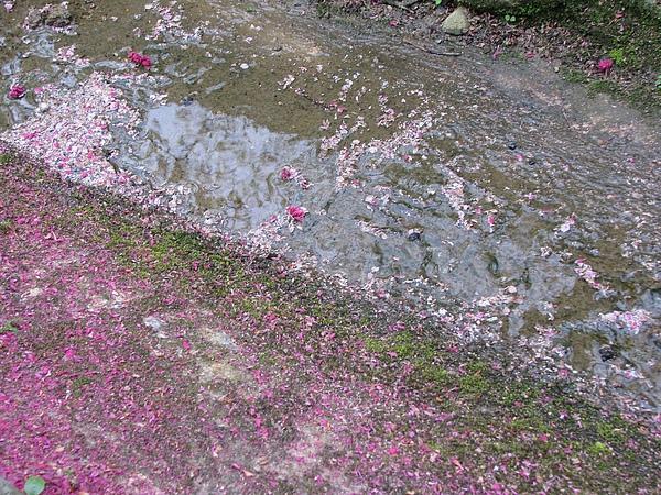 櫻花都到這來了... Orz