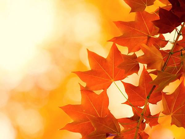 autumn-leaves-brightness.jpg