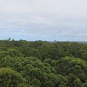 3-8.頂端看到一片的樹海~