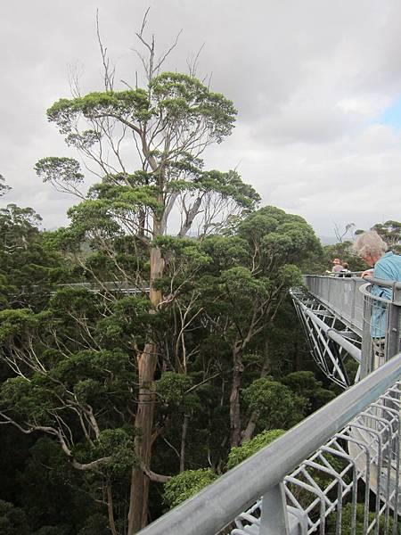 3-17.TREE TOP WALK 簡單來說就是很多的樹,有著比火警樹還安全的鐵網....但還是火警樹特別~