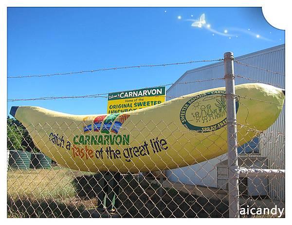 CARNARVON 香蕉大鎮